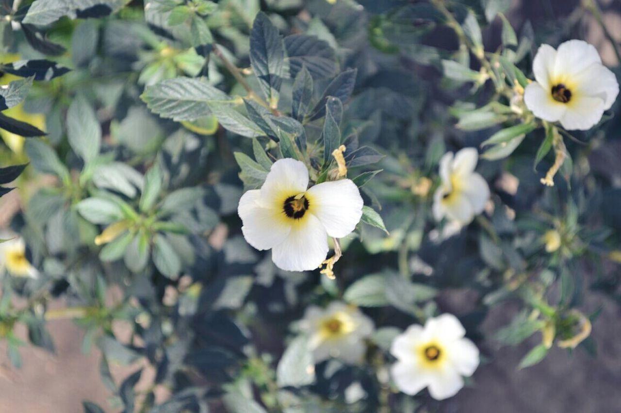Flores ❤ Flores Y Más Flores Flores E Folhagens Flores Flores Y Texturas