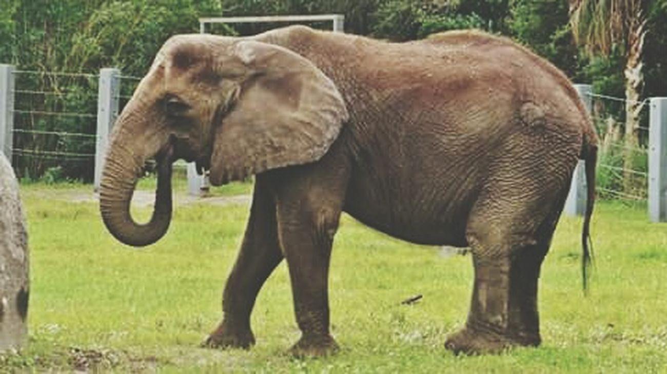 Jacksonville Zoo Elephantlove ZooLife Elephant Capture The Moment