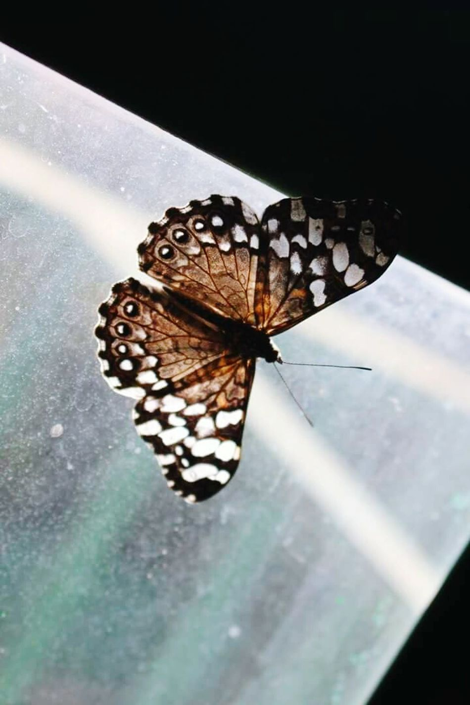 One Animal Butterfly - Insect Insect Animal Themes Animal Wildlife Animals In The Wild No People Close-up Animal Markings Day Nature Outdoors Perching Baterfly Garden Tranquility Reflection Fragility Baterfly Freshness Beauty In Nature Nature Butterfly
