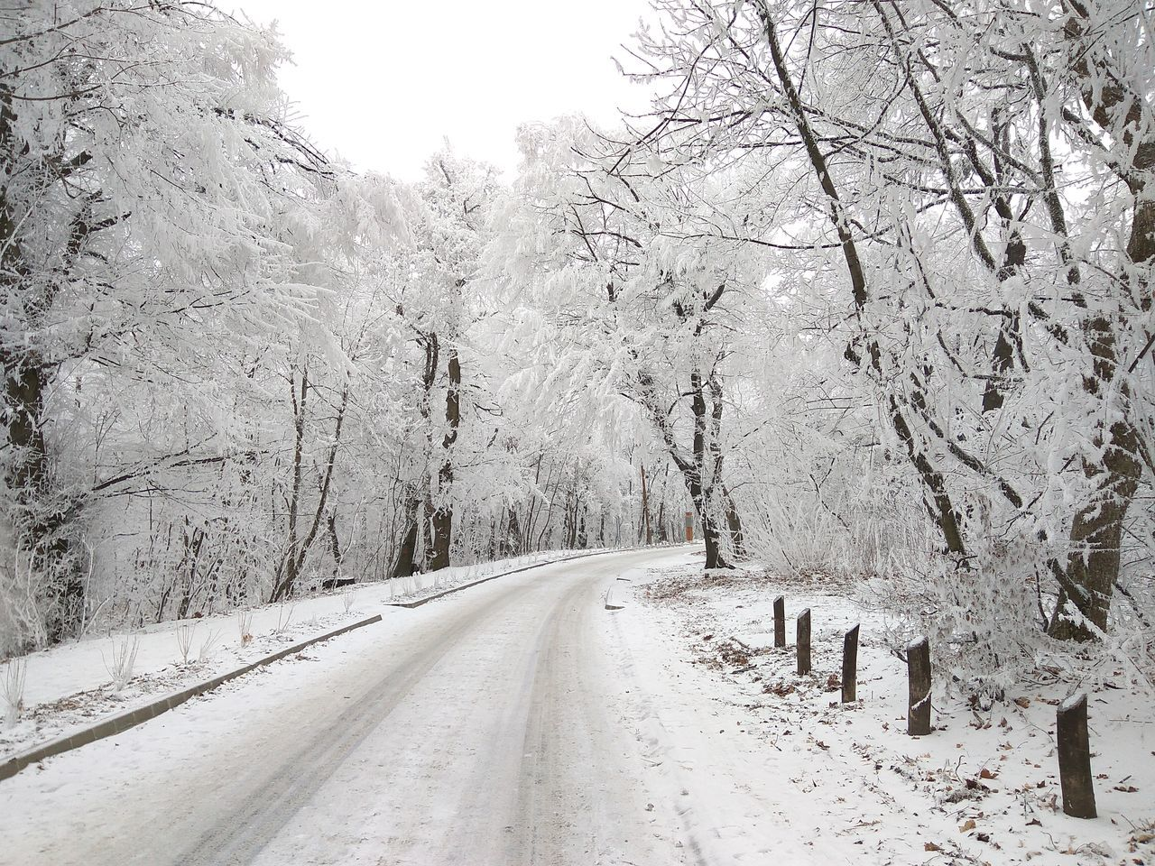 road Cold Temperature Weather Snow Winter Tree The Way Forward Road No People Nature Day Snowing Outdoors Beauty In Nature Hungary Xiaomiphotograph Winter Fog Landscape Normafa