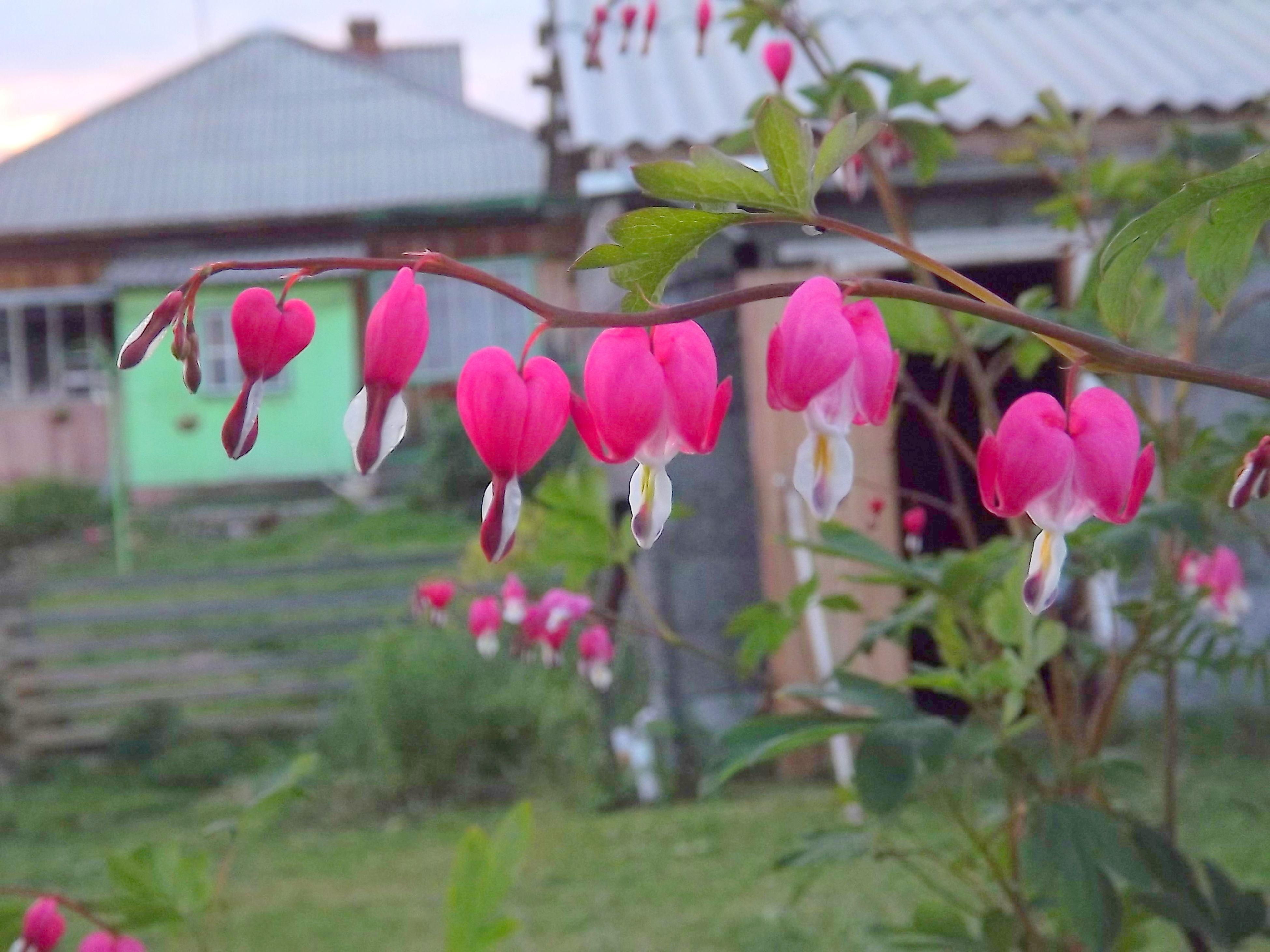 Природа♥ красота♥цветы ♥ First Eyeem Photo