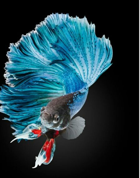 Using photoshop for the blackbackgroound Taking Photos Relaxing OpenEdit Tutte Myfish Water Colors Bleu
