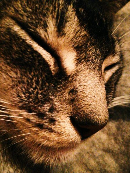 Always Be Cozy One Animal Domestic Animals Mammal Pets Animal Body Part Animal Themes Close-up Animal Head  Domestic Cat Animal Eye No People Animal Nose Feline Full Frame Snout Indoors  Backgrounds Day Pet Portraits