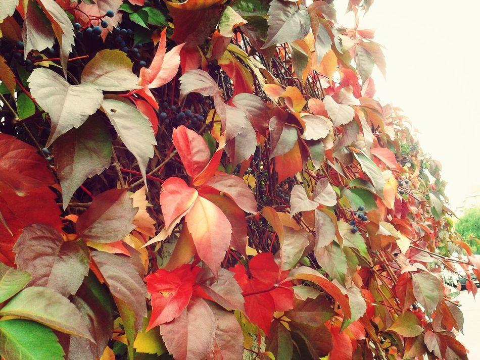 EyeEm Best Shots-My World Nature_collection Flowers,Plants & Garden EyeEm Gallery Nature_collection