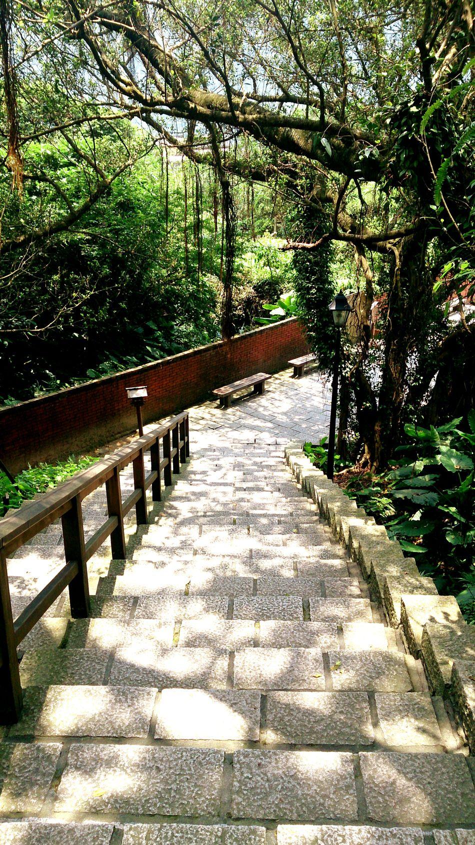 EyeEm Best Shots Enjoying The View Traveling 金瓜石 Trees Relaxing Beautiful Day Ladder