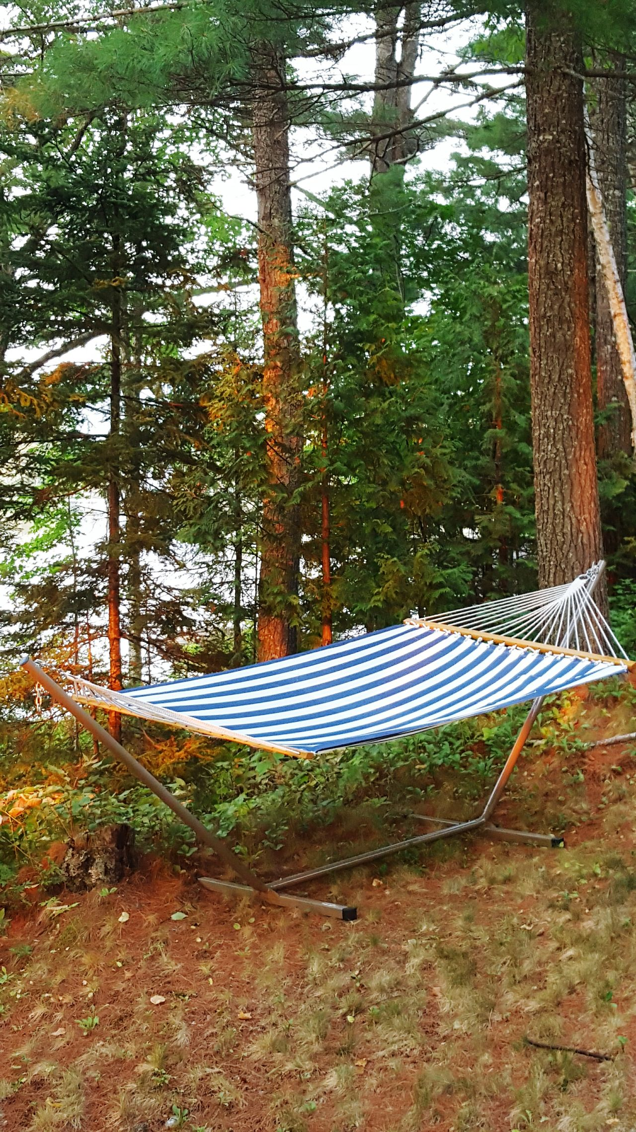 My Afternoon Hammock Hammocking Maine The Way Life Should Be Mainephotography Mainelife Hammocklife Sunset✨trees✨ Maine Hammock Hammock Time