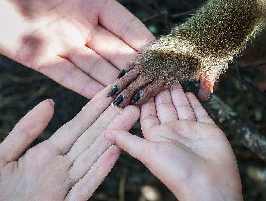 Animal Hand Animal Themes Close-up Connected With Nature Connecting With Animals Day Differents Four Hands Friendship Holding Human Body Part Human Finger Human Hand Mammal Monkey One Animal One Person Outdoors Pets Real People Touching