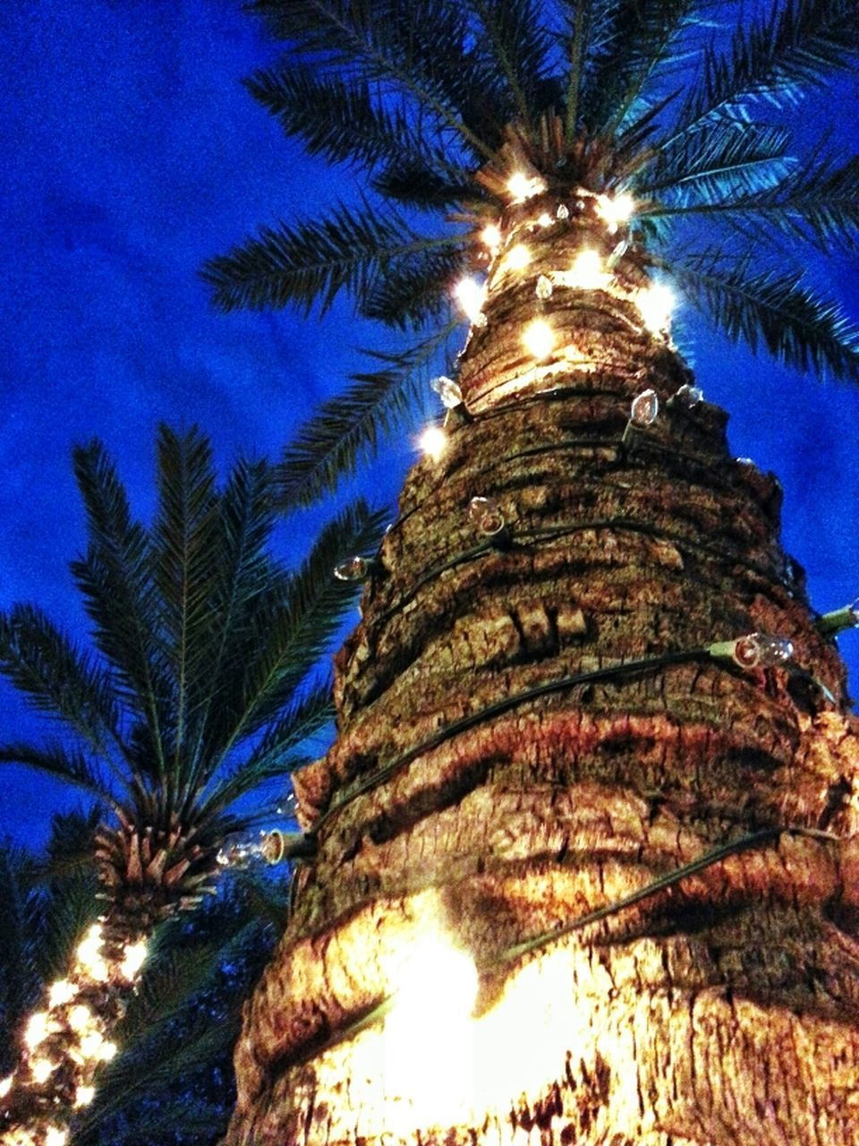 low angle view, tree, palm tree, tree trunk, no people, growth, beauty in nature, illuminated, blue, nature, outdoors, sky, night