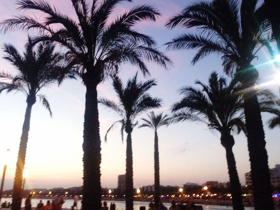 Palmtree Holiday Paradise Sunset