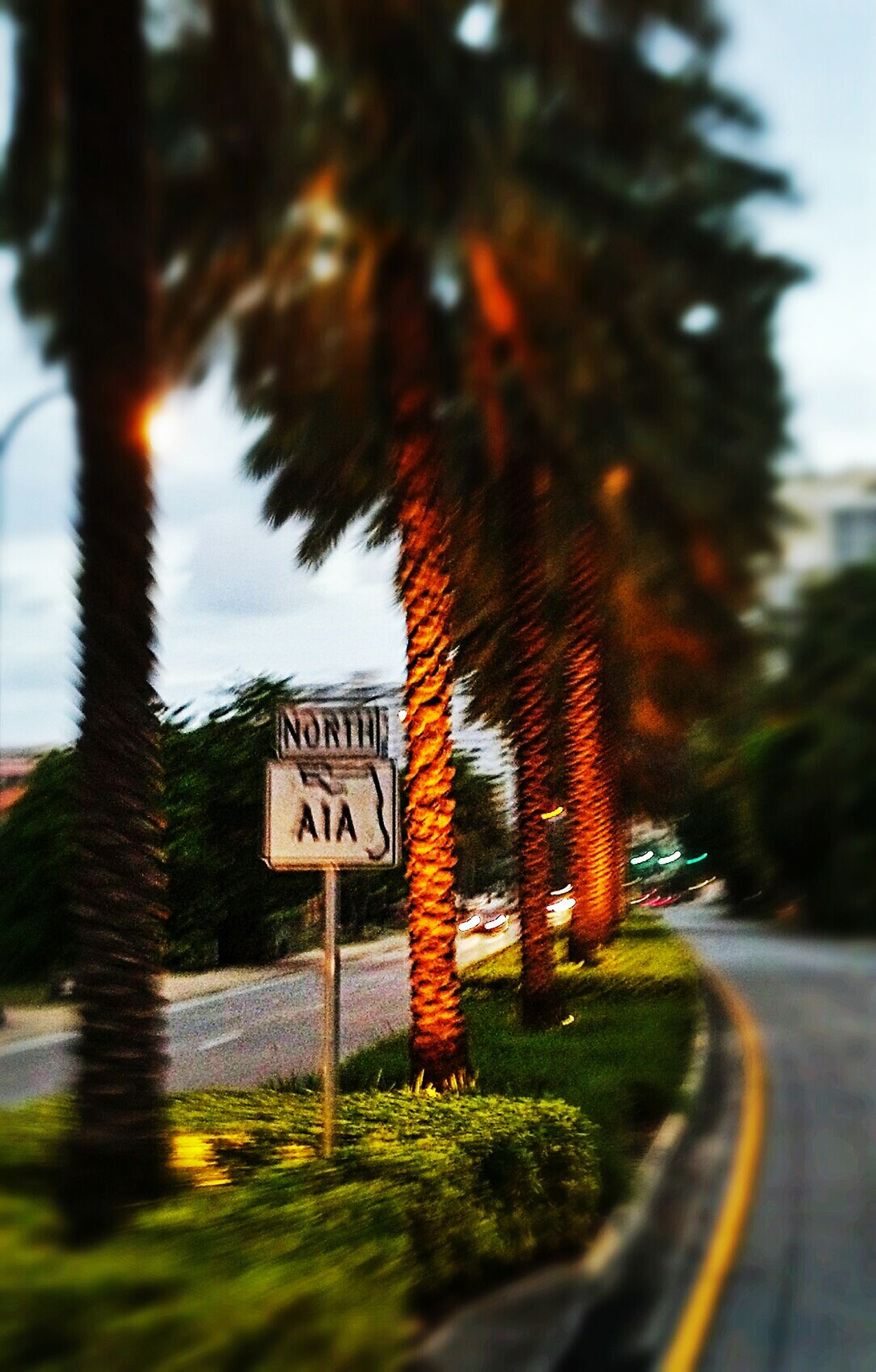 My Year My View Transportation Blurred Motion Road Sign Motion Travel Road A1A No People Vacation Spot Beach Road Scenic Drive Nature Day Outdoors Sky Text Tree Excitement Florida Beaches Tree Transportation No People Road Sign Text