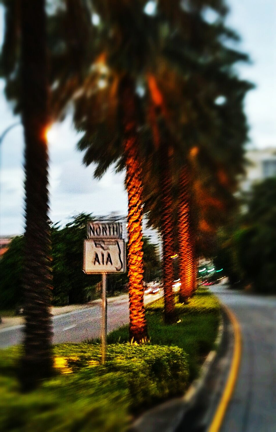 Transportation Blurred Motion Road Sign Motion Travel Road A1A No People Vacation Spot Beach Road Scenic Drive Nature Day Outdoors Sky Text Tree Excitement Florida Beaches Tree Transportation No People Road Sign Art Is Everywhere