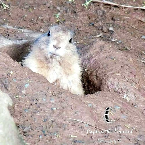Hanging Out Check This Out Hello World Enjoying Life Taking Photos Lemmings Lemming Lemmings2
