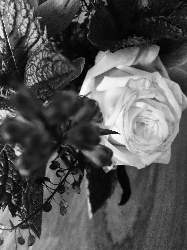 Flower Roses Rosé Blackandwhite Black And White Black & White Monochrome Floral Bouquet