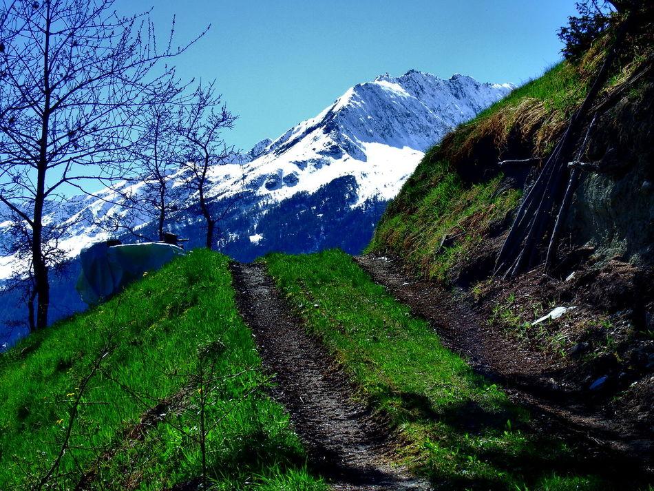 Winter - spring Alpen Beauty In Nature Blue Day Feldweg Green Color Jahreszeiten Landscape Mountain Nature Outdoors Plant The Way Forward Tree