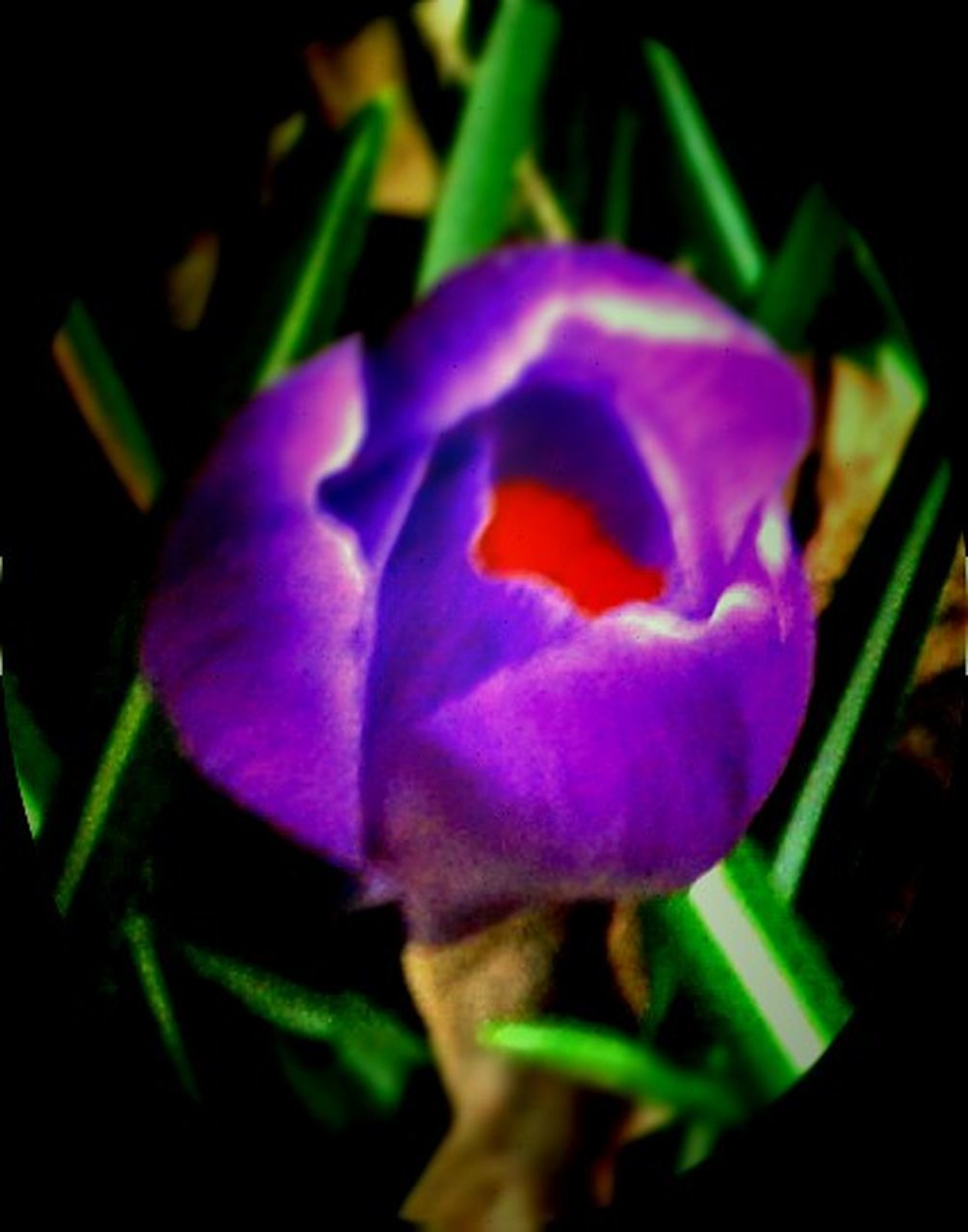 flower, fragility, petal, growth, nature, beauty in nature, purple, plant, no people, freshness, flower head, close-up, outdoors, day, leaf, blooming