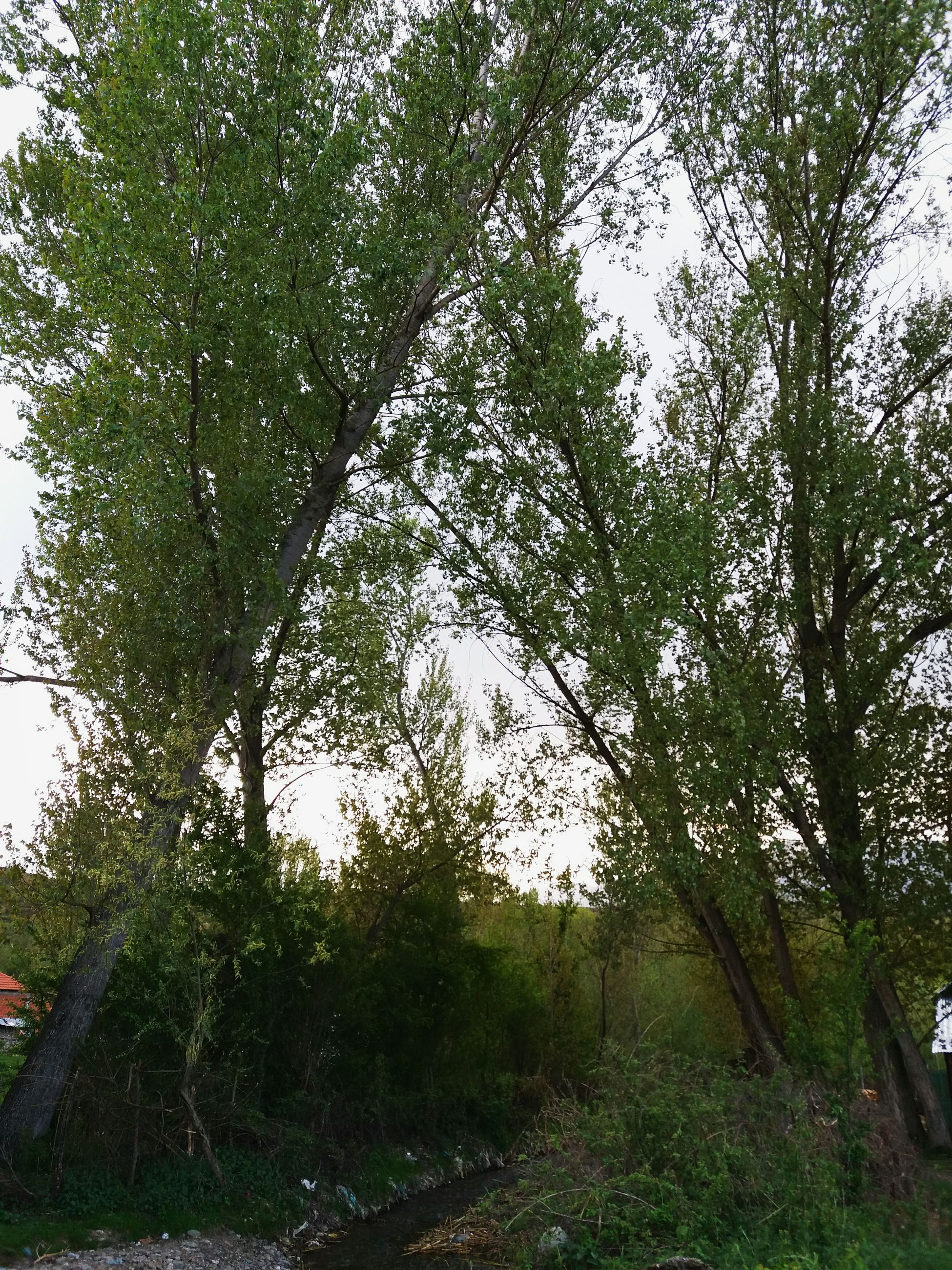 tree, nature, forest, outdoors, growth, tranquility, day, no people, landscape, beauty in nature, scenics, branch, grass, sky