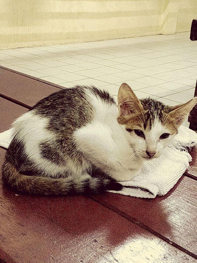 วันนี้ อากาศเย็น น้องแมวนอนหนาว First Eyeem Photo