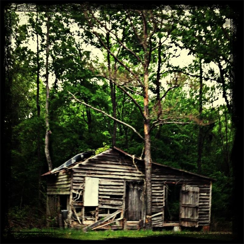 Long Forgotten in The Woods of Martin County