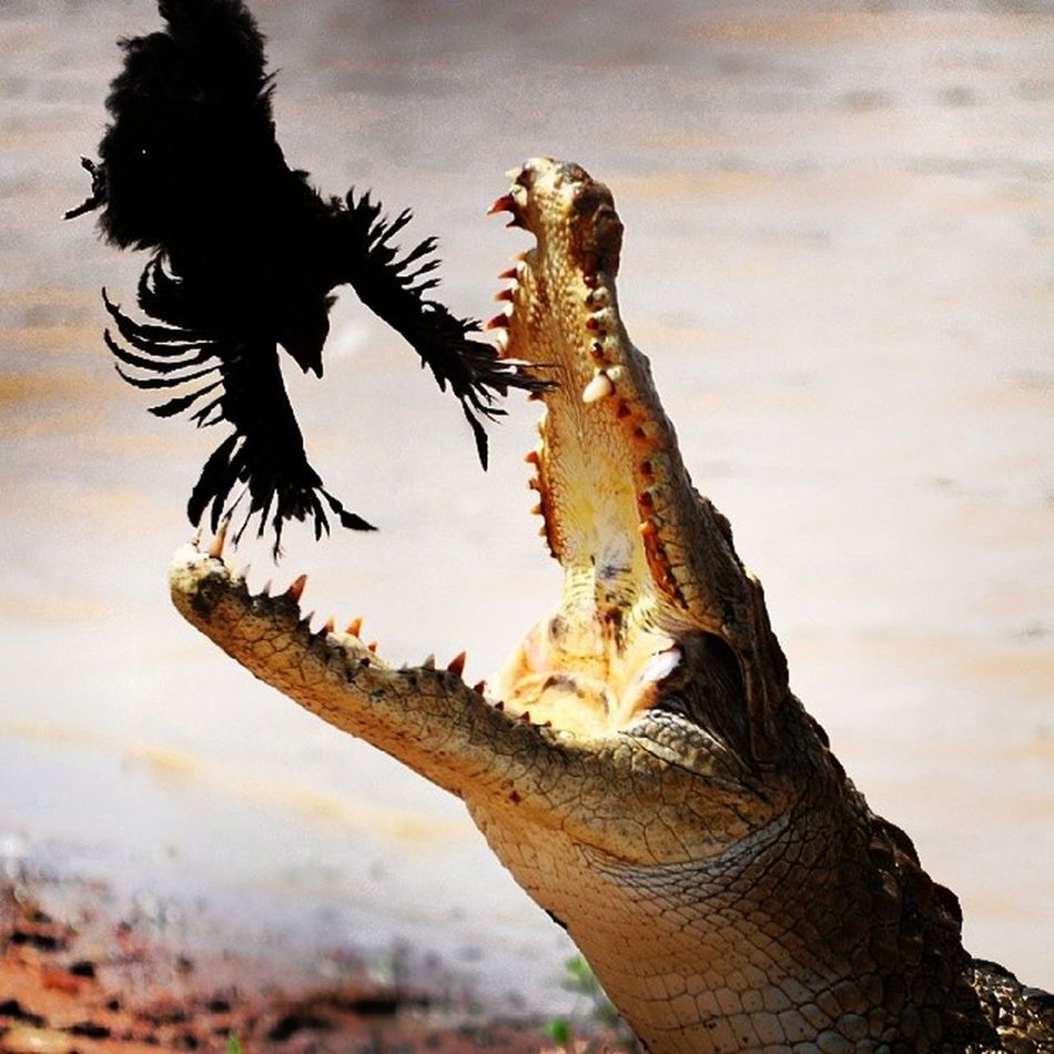 Throwback to that one time I was in Burkinafaso WestAfrica Africa bazoule crocodile lunch