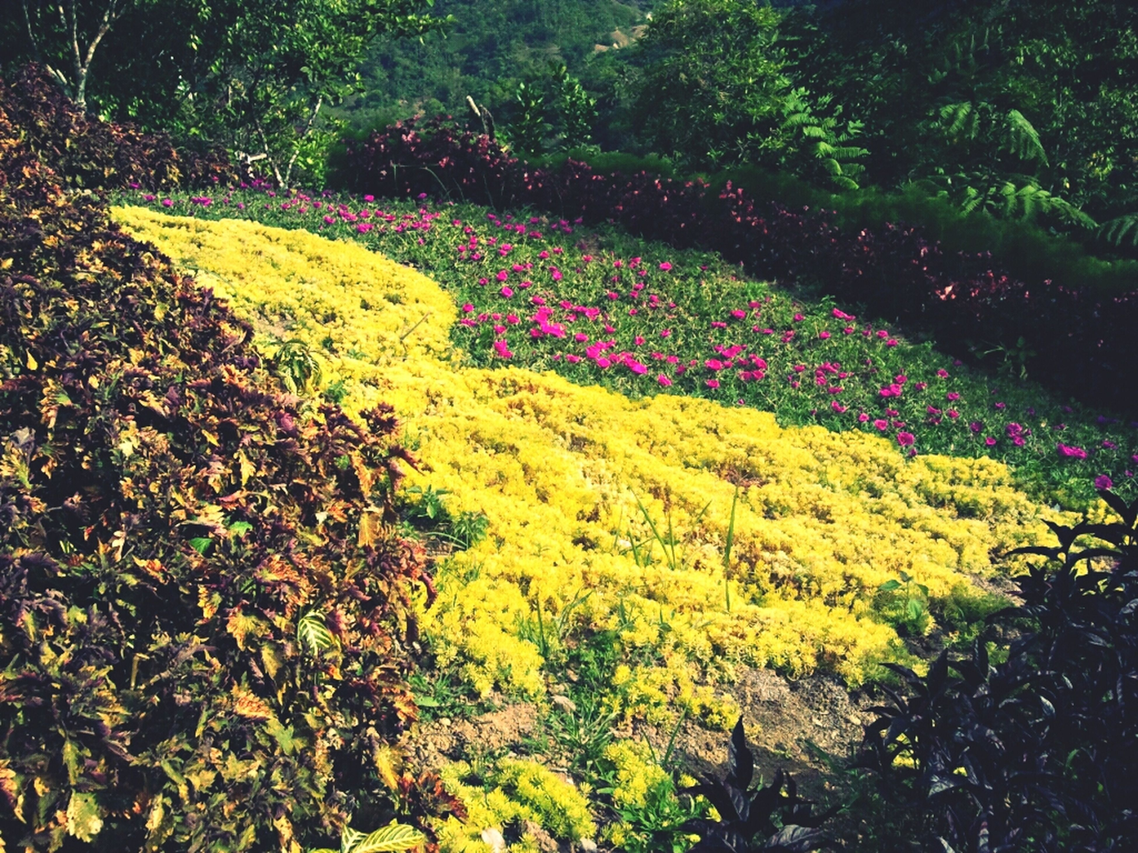 flower, growth, tree, yellow, beauty in nature, high angle view, nature, plant, tranquility, park - man made space, green color, leaf, multi colored, outdoors, autumn, freshness, tranquil scene, day, season, lush foliage