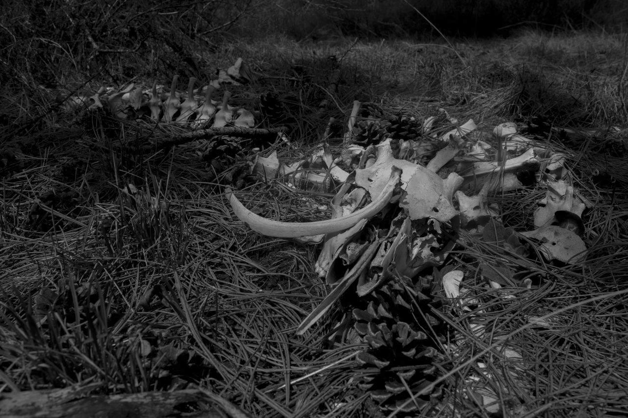 Animal Skeleton On Field At Forest