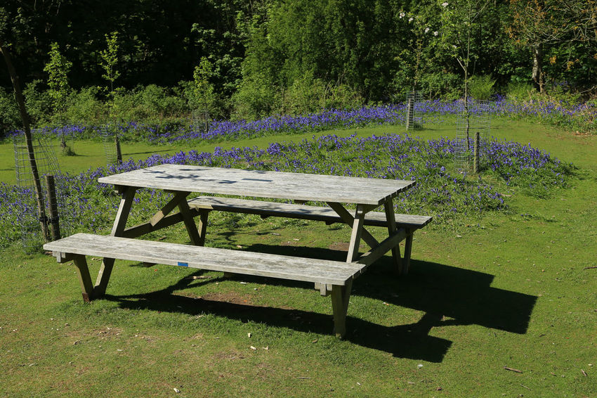 Absence Bluebells Bromsgrove Community Orchard Country Park Day Grass Landscape Lickey Hills Nature No People Outdoors Picnic Table Table Tree Woods Worcestershire Uk