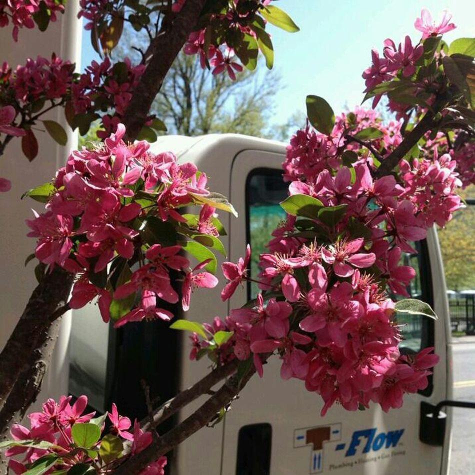 Pink Flower Flower Flowers :)