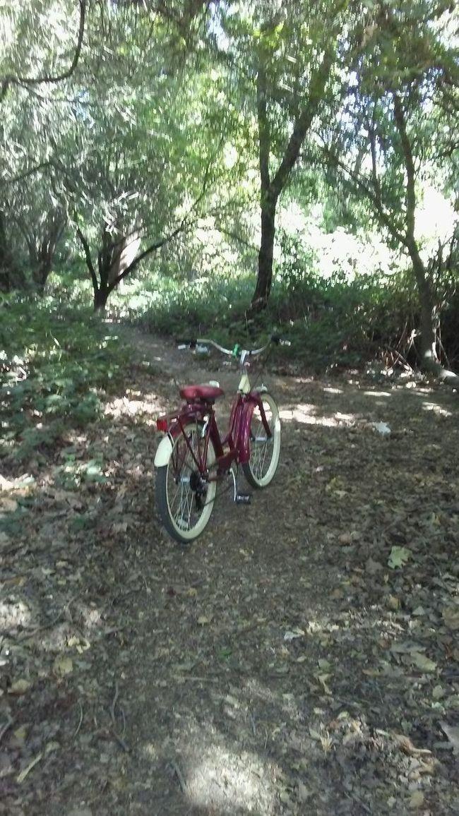 Break time. Athleisure Hanging Out Enjoying Life Healthy Living Trees Biking Adventures Bike Trail