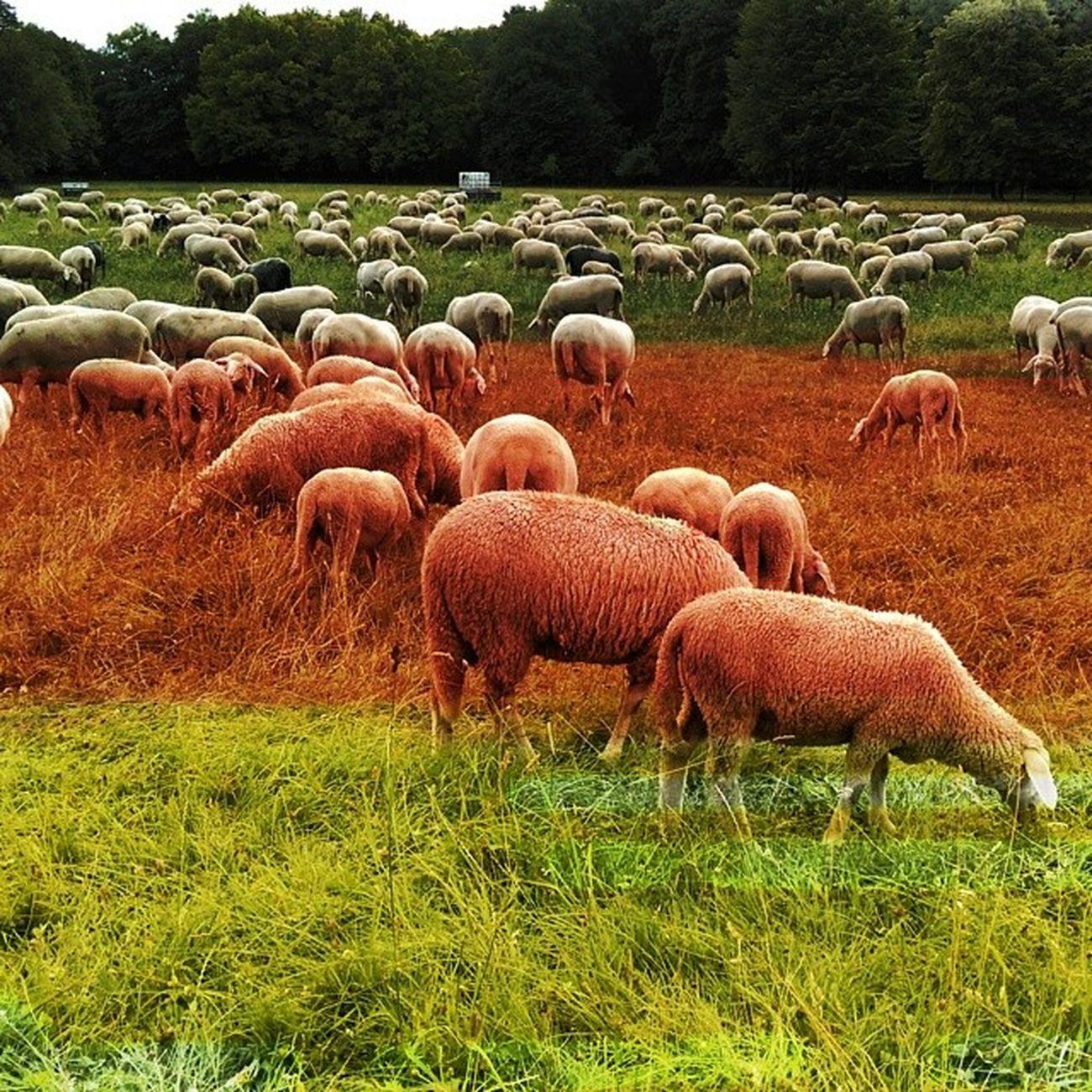 Nervös, lenke mich mit Schafe zählen ab. Ger AneurerSeite BereitWieNie GERARG WorldCup2014