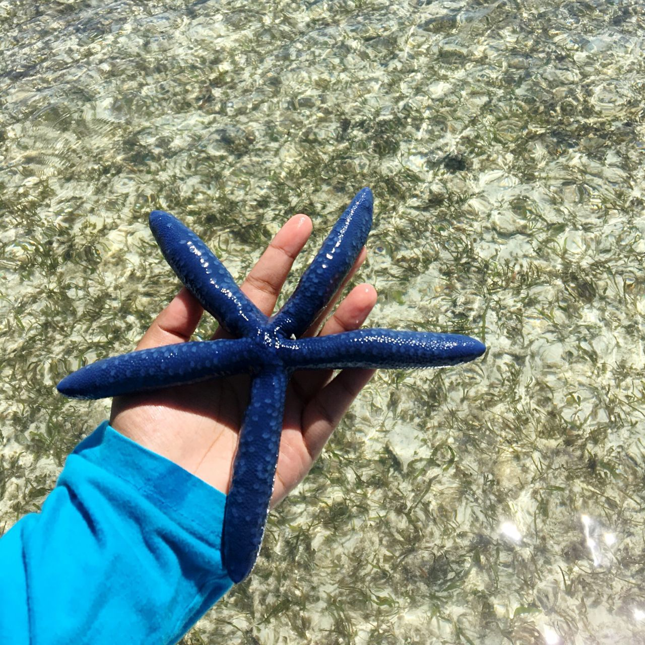 Starfish At Beach Beachphotography Sea Life Blue Outdoors Day Chilling Water Nature_perfection Semporna Sabah