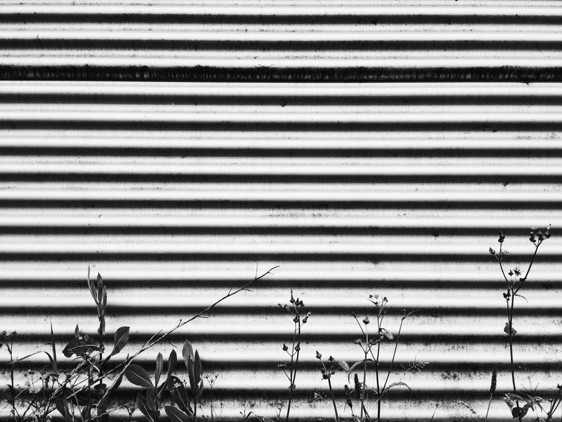 Blackandwhite Black & White Black And White Blackandwhite Photography Flowers Grass Industrial Industrial Landscapes Industrial Nature Lines Structures & Lines Structure Abstract Abstract Photography