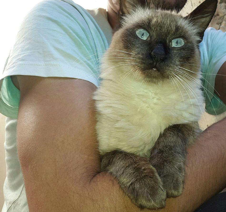 My cat Ricky Photography Cat Cat♡