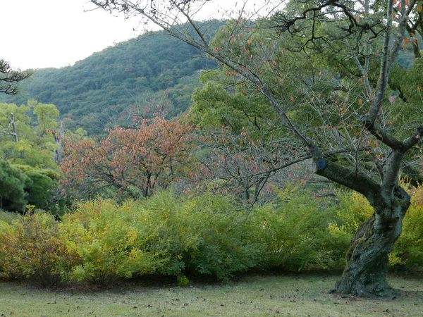 Ritsurin Garden in early fall... Japan Japanese Garden Takamatsu Fall Beauty Fall The Purist (no Edit, No Filter) The Places I've Been Today Ritsurin Garden Ritsurin Park - Takamatsu - Japan The Great Outdoors - 2015 EyeEm Awards The Traveler - 2015 EyeEm Awards On The Road