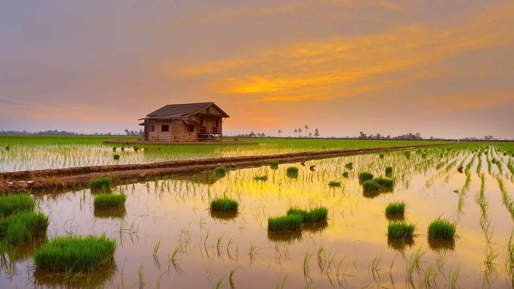 Agriculture Architecture Beauty In Nature Building Exterior Built Structure Day Field Grass Landscape Nature No People Outdoors Scenics Sky Sunset Tranquility Water Paint The Town Yellow Lost In The Landscape