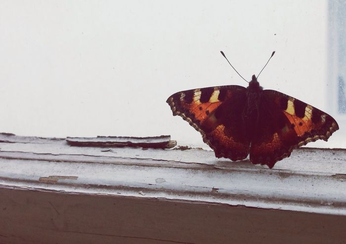it isn't really cold,... Butterfly Winter Globalwarming