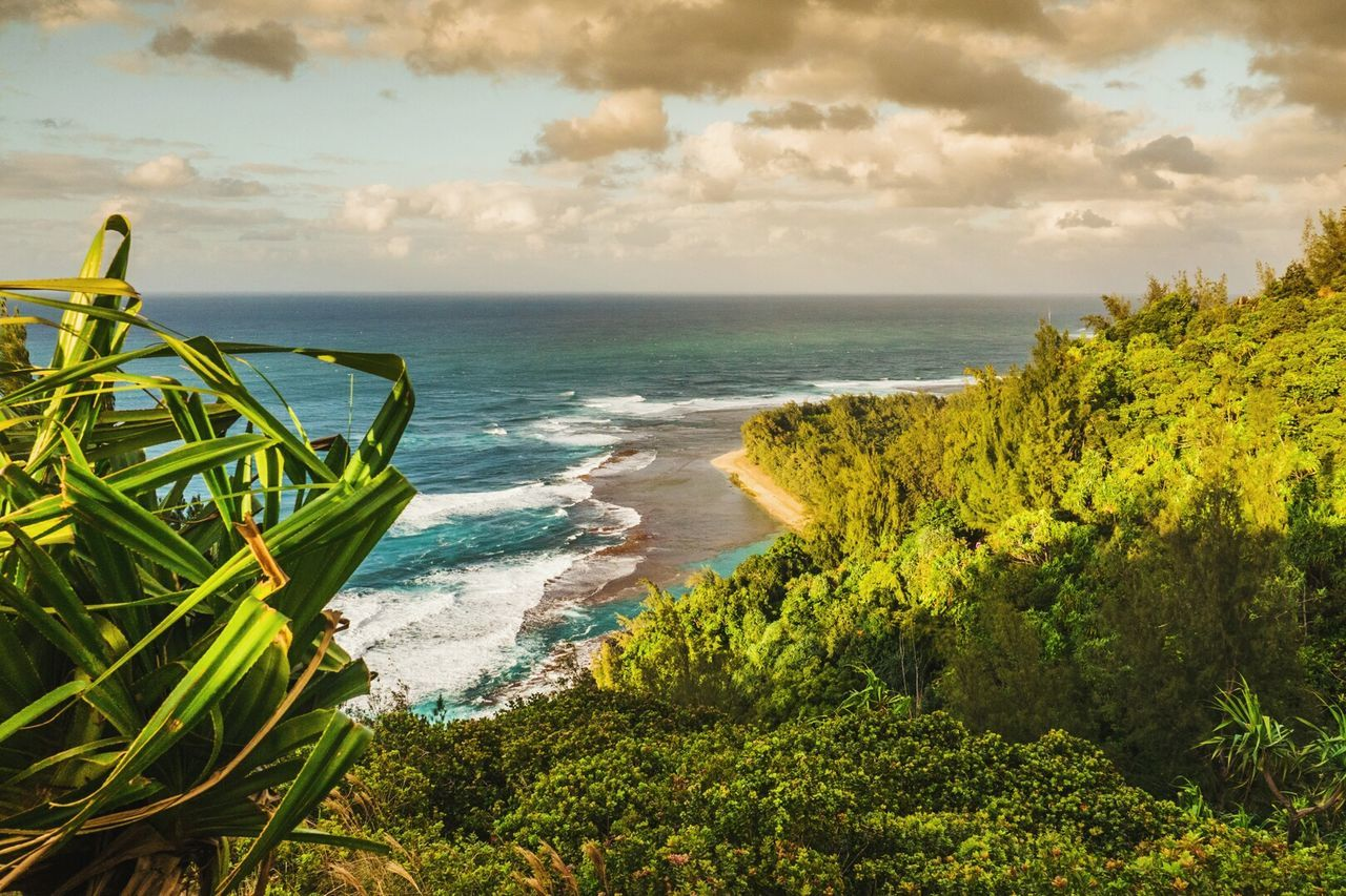 Sea Horizon Over Water Beach Beauty In Nature Water Scenics Tranquility Nature Travel Destinations Tranquil Scene No People Outdoors Sky Tree Day KalalauTrail Landscape JurrasicWorld Lifeisbeautiful Kauai Hawaii Hawaii Beauty In Nature Nature Tree Green Color