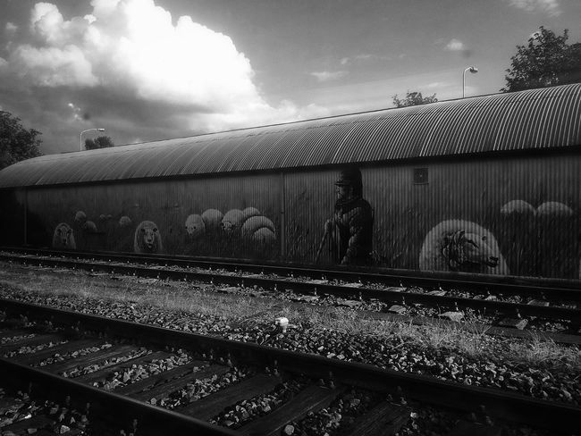 Trainphotography Enroute Sheep AMPt_community ArtWork Bestoftheday Hidden Gems