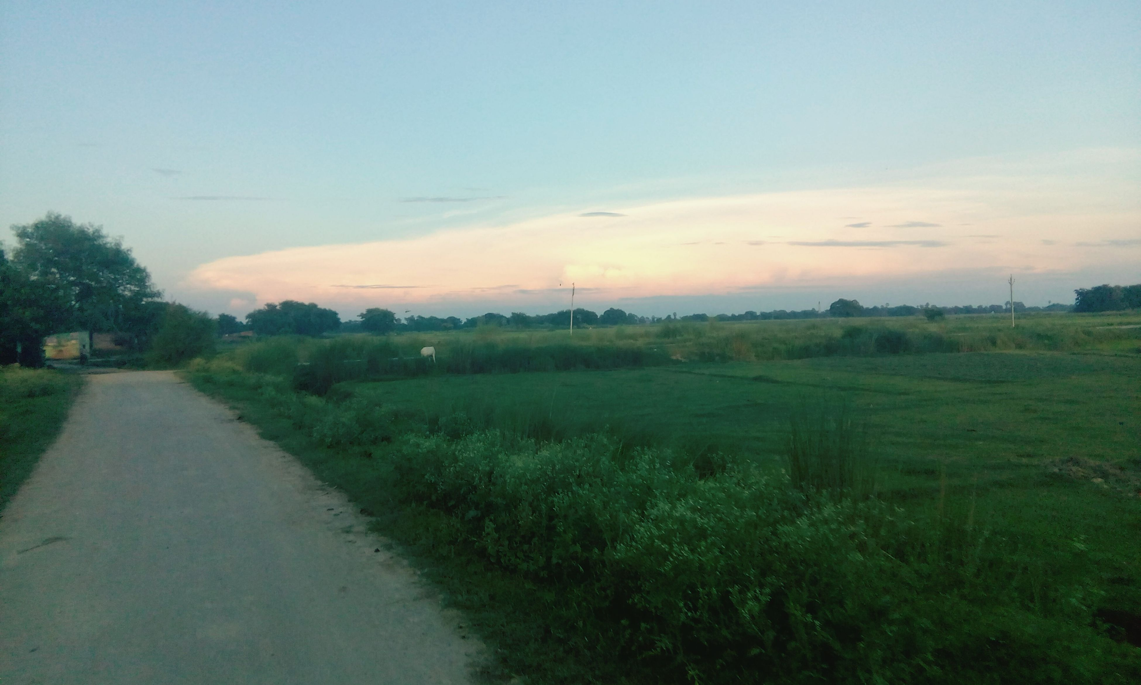 sky, grass, tranquil scene, landscape, tranquility, the way forward, field, scenics, nature, beauty in nature, cloud, growth, cloud - sky, diminishing perspective, grassy, outdoors, day, green color, non-urban scene, no people, solitude, remote