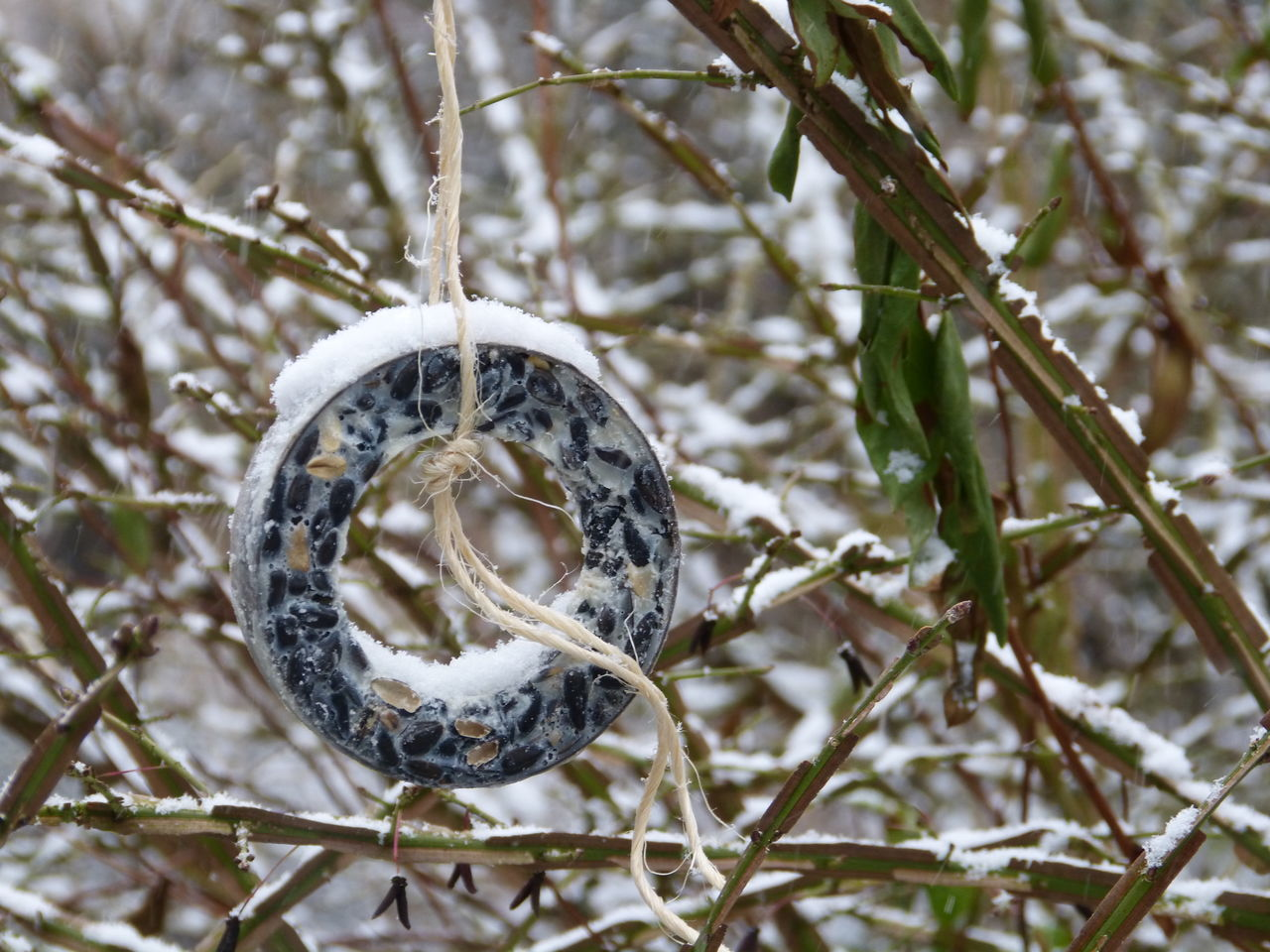 Silent moment in winter time ... :-) Beauty In Nature Bird Food Bird Food! Bird Life Bird Nest Branch Bushes And Flowers Bushes And Trees Close-up Cold Temperature Day Focus On Foreground Food Ring Freedom Of Life Nature Nature Photography No People Outdoors Silence Of Nature Snow Snow Day Tree Winter Food Winter Food For Wild Life Winter Wonderland