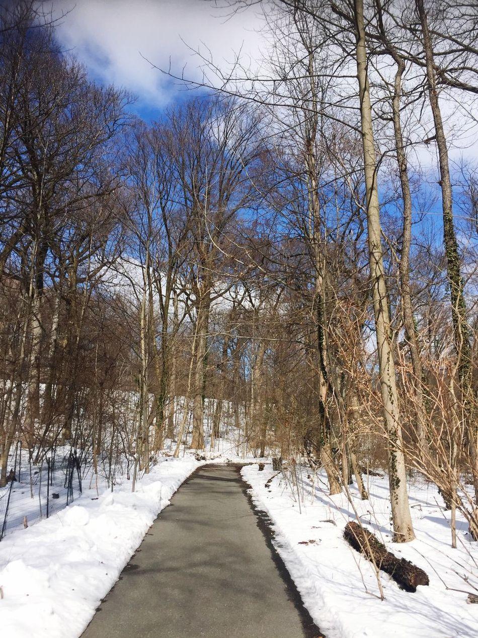 Feelin like Snow White Winter Nature Snow Prospect Park
