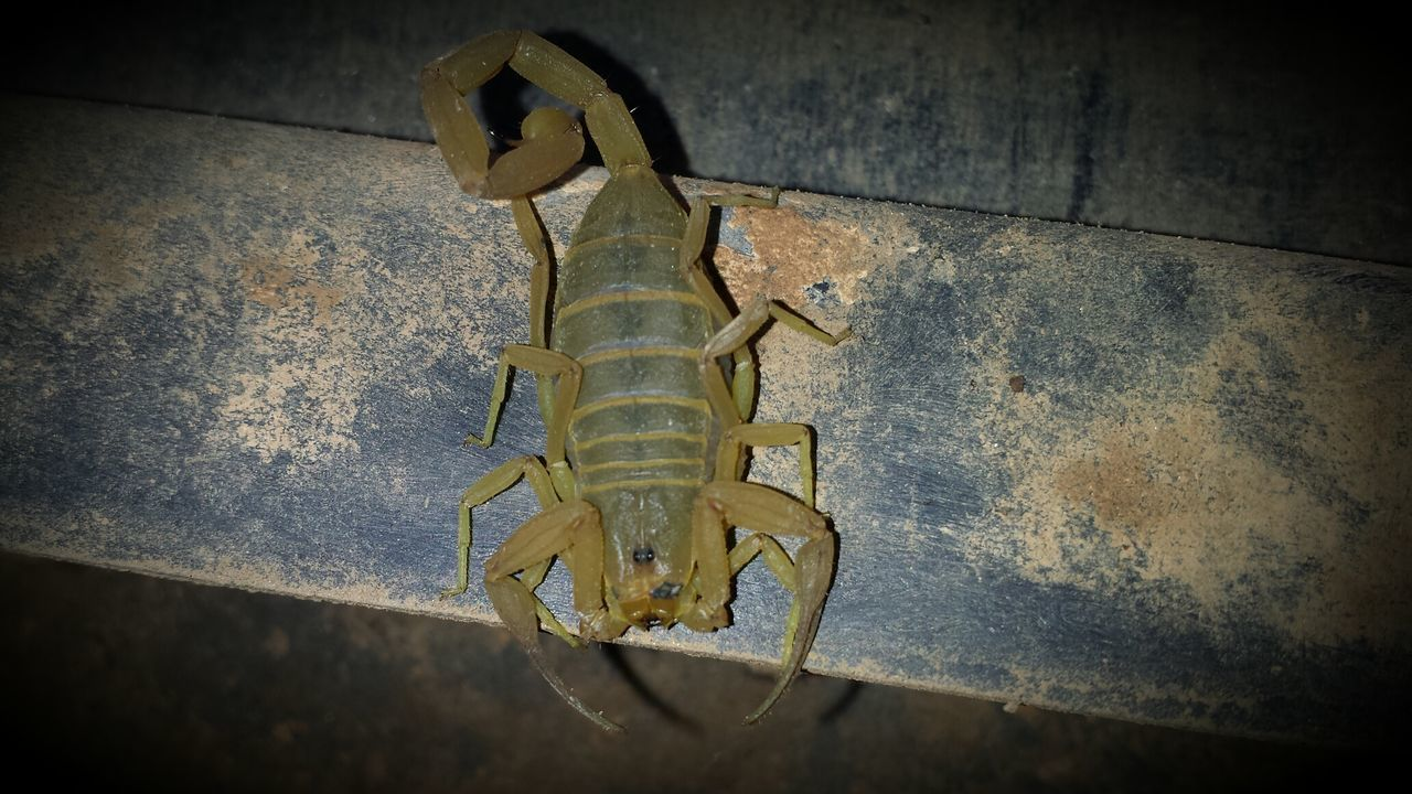 Part Of My Job ! Scorpion Check This Out Life almostgotme