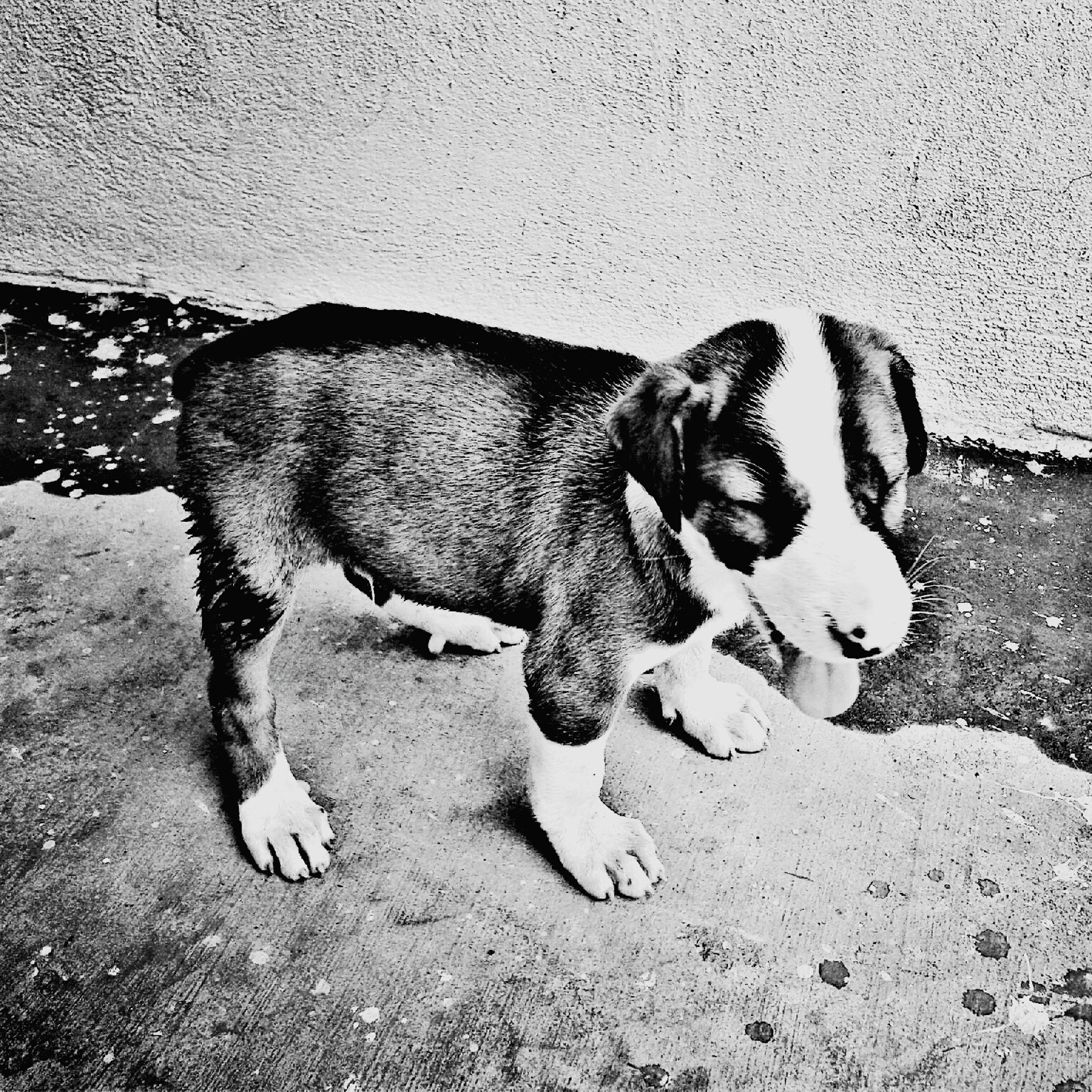 one animal, animal themes, domestic animals, dog, zoology, outdoors, pets, animal, animal head, day, no people, pampered pets, loyalty