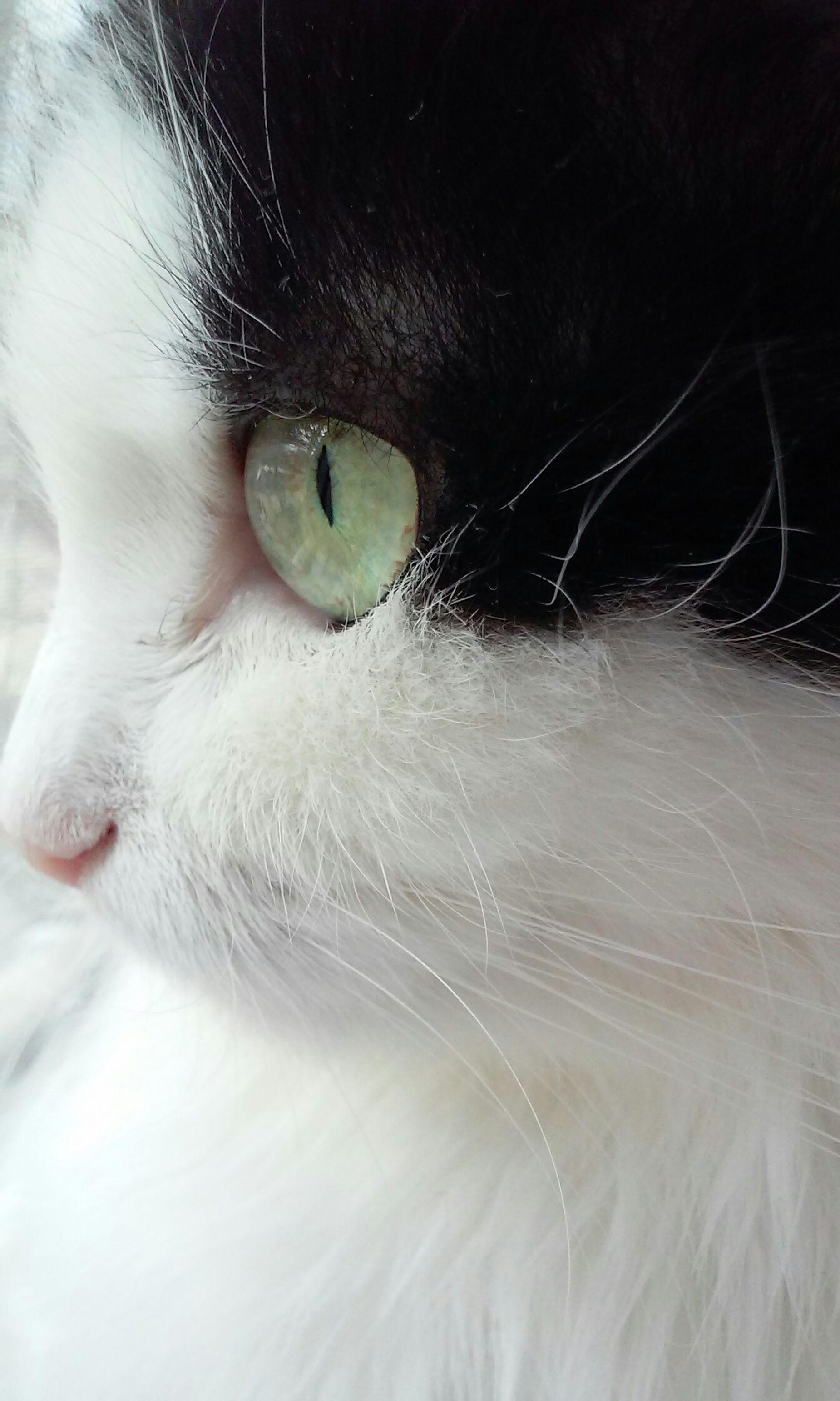 мусильда Cat