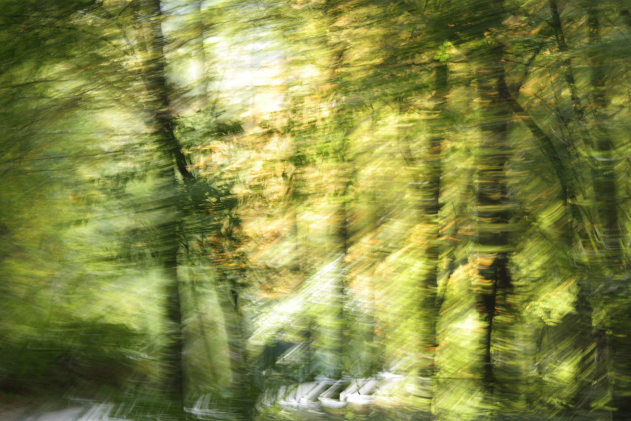 Defocused Image Of Trees In Forest