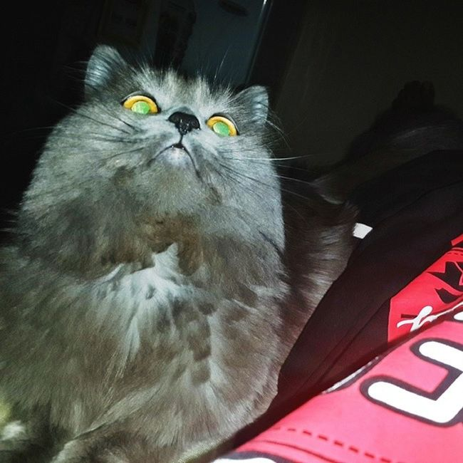 good morning from my cat  تصويري Evil_look Cat