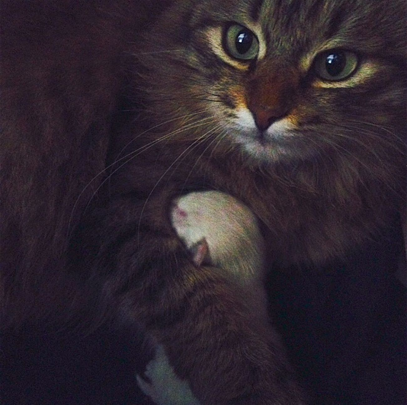 Глаза искренней матери First Eyeem Photo cat ?
