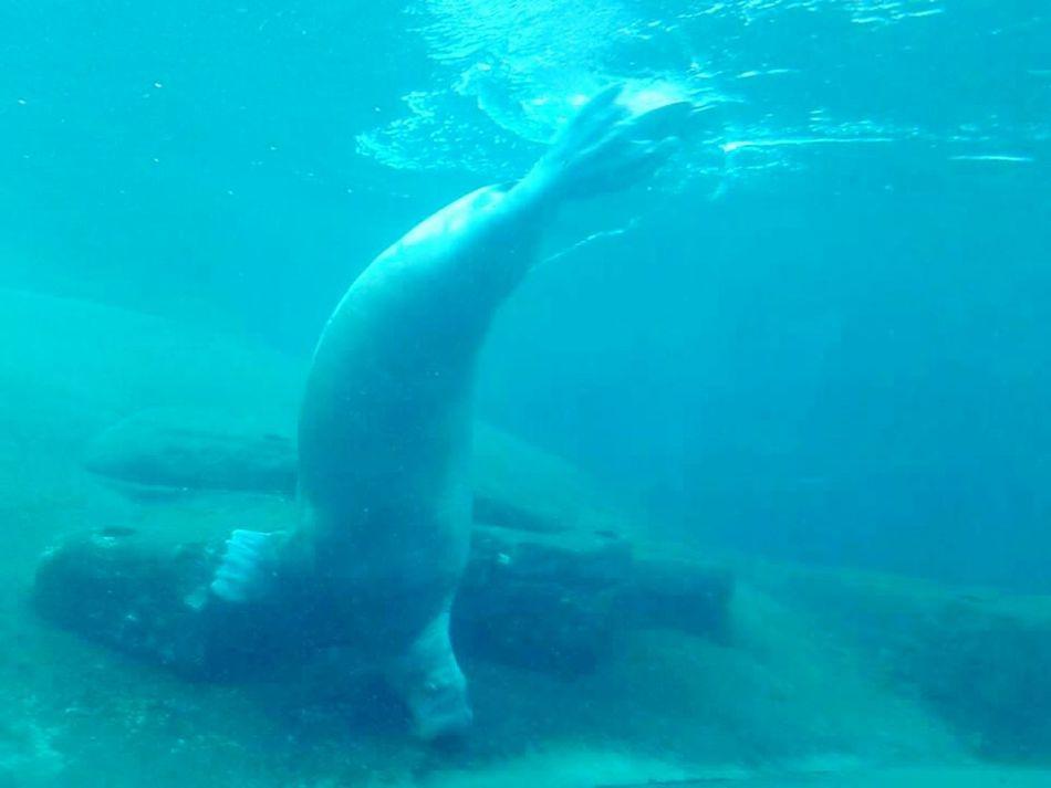 Seacow Dolfinarium in HarderwijkWater Sea Life FamilyTime WaterCreature Funtimes Swimming