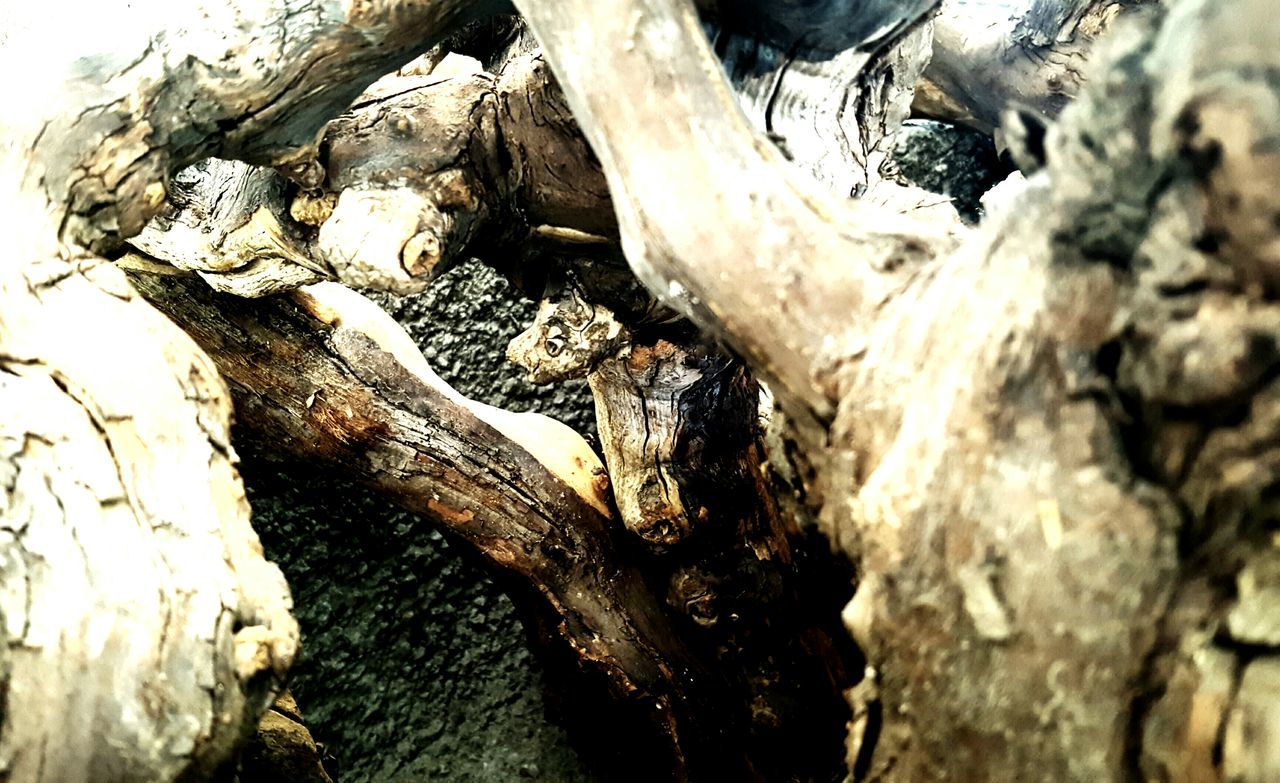 tree trunk, wood - material, textured, tree, no people, nature, bark, log, day, rough, close-up, outdoors, tree stump, dead tree