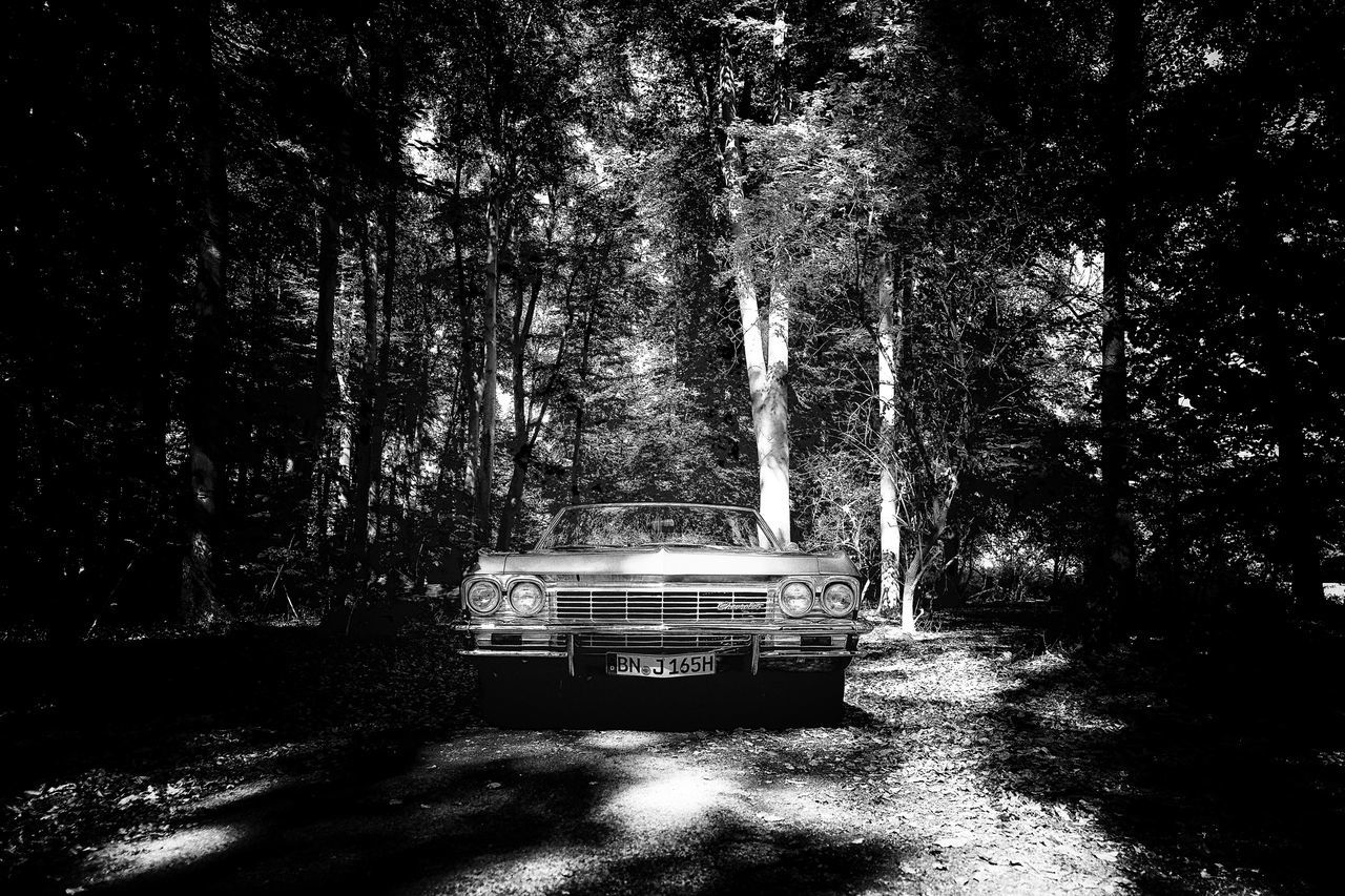 Leica Impala Impala Chevrolet Vintage Vintage Cars Cars Oldtimer Forest WoodLand Nature Day Blackandwhite Photography Photooftheday Classic Outdoors Travel Tree Leicacamera Tree Trunk
