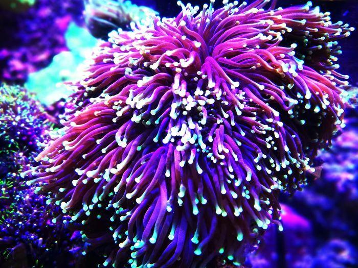 Corals Underwater Coral Sea Life Reef Coral Reef Reef Tank Reeftank